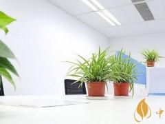 吸收二手烟植物排行榜 吸收二手烟最佳的植物常青藤