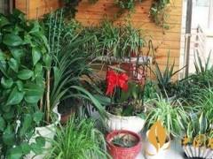 吸烟的房间放什么植物好 吸烟家里需要什么植物