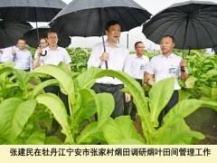 张建民在黑龙江烟草调查