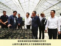 杨培森在西藏烟草调查